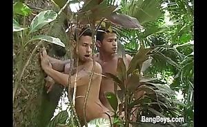 Gatos Brasileiros - Jungle Cruisers